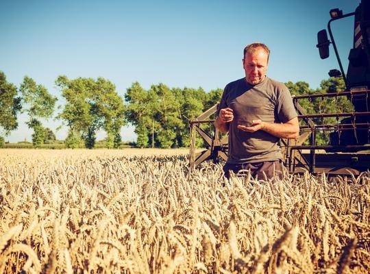 Применение единого сельскохозяйственного налога